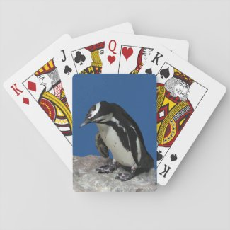 African Penguin Playing Cards