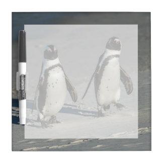African penguin (Spheniscus demersus)2 Dry-Erase Board