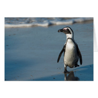 African penguin (Spheniscus demersus) 3 Card