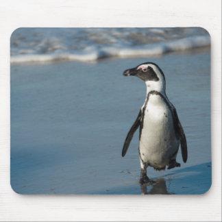 African penguin (Spheniscus demersus) 3 Mouse Pad