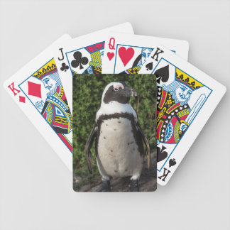 African penguin (Spheniscus demersus) 4 Bicycle Playing Cards