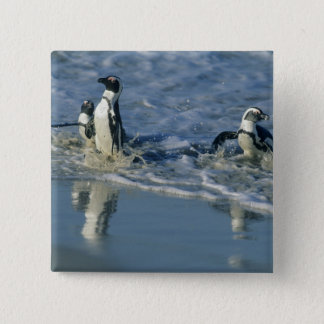 African Penguin, (Spheniscus demersus), coming 2 Button