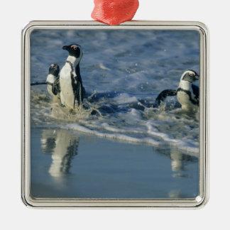African Penguin, (Spheniscus demersus), coming 2 Metal Ornament
