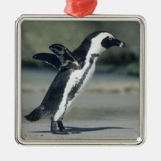 African Penguin, (Spheniscus demersus), coming Metal Ornament