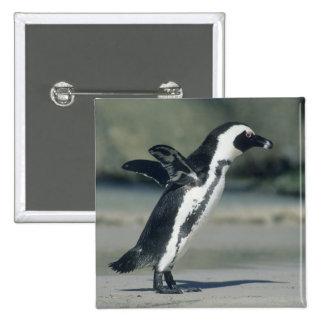 African Penguin, (Spheniscus demersus), coming Pinback Button