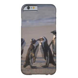 African Penguin (Spheniscus demersus) or Jackass 2 Barely There iPhone 6 Case