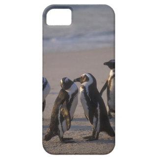 African Penguin (Spheniscus demersus) or Jackass 2 iPhone SE/5/5s Case