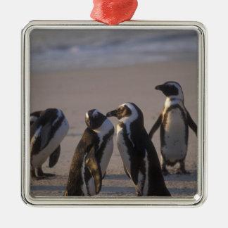 African Penguin (Spheniscus demersus) or Jackass 2 Metal Ornament