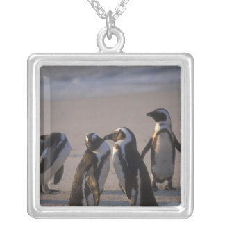 African Penguin (Spheniscus demersus) or Jackass 2 Silver Plated Necklace