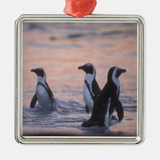 African Penguin (Spheniscus demersus) or Jackass 3 Metal Ornament