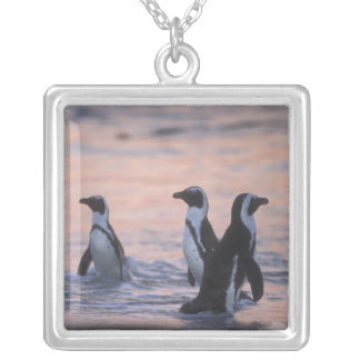 African Penguin (Spheniscus demersus) or Jackass 3 Silver Plated Necklace