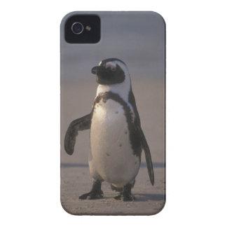 African Penguin (Spheniscus demersus) or Jackass iPhone 4 Case-Mate Case
