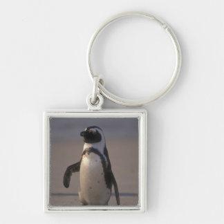 African Penguin (Spheniscus demersus) or Jackass Keychain