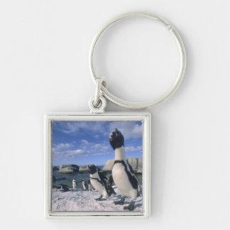 African Penguin ((Spheniscus demersus) wild, Keychain