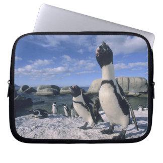 African Penguin ((Spheniscus demersus) wild, Laptop Sleeves