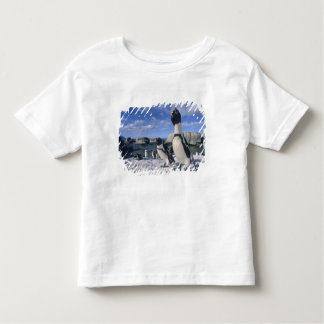 African Penguin ((Spheniscus demersus) wild, Toddler T-shirt