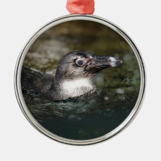 African penguin swimming metal ornament