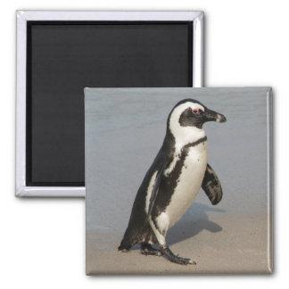 African Penguin Walking Magnet