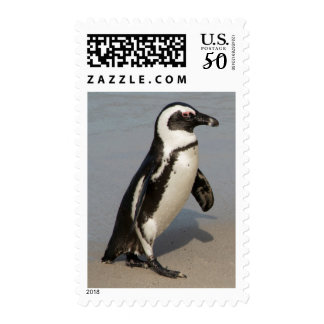 African Penguin Walking Postage