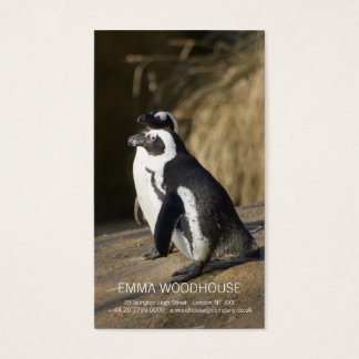 African Penguins • Business Card Template
