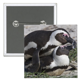 African Penguins, formerly known as Jackass 2 Button