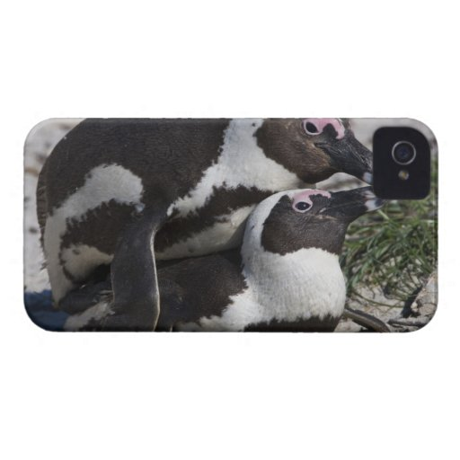 African Penguins, formerly known as Jackass 2 Case-Mate Blackberry Case
