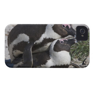 African Penguins, formerly known as Jackass 2 iPhone 4 Case
