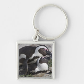 African Penguins, formerly known as Jackass 2 Keychain