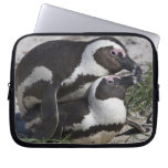 African Penguins, formerly known as Jackass 2 Laptop Computer Sleeves