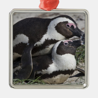 African Penguins, formerly known as Jackass 2 Metal Ornament