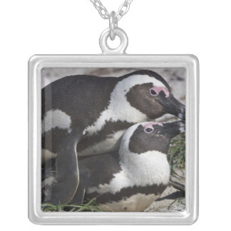 African Penguins, formerly known as Jackass 2 Silver Plated Necklace