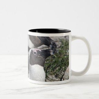 African Penguins, formerly known as Jackass 2 Two-Tone Coffee Mug