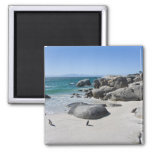 African Penguins, formerly known as Jackass 3 2 Inch Square Magnet