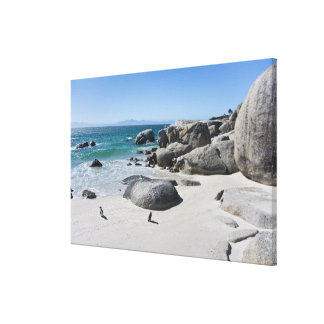 African Penguins, formerly known as Jackass 3 Canvas Print