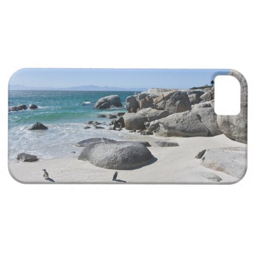 African Penguins, formerly known as Jackass 3 iPhone 5 Case