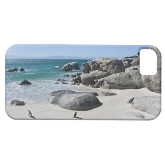 African Penguins, formerly known as Jackass 3 iPhone 5 Cases