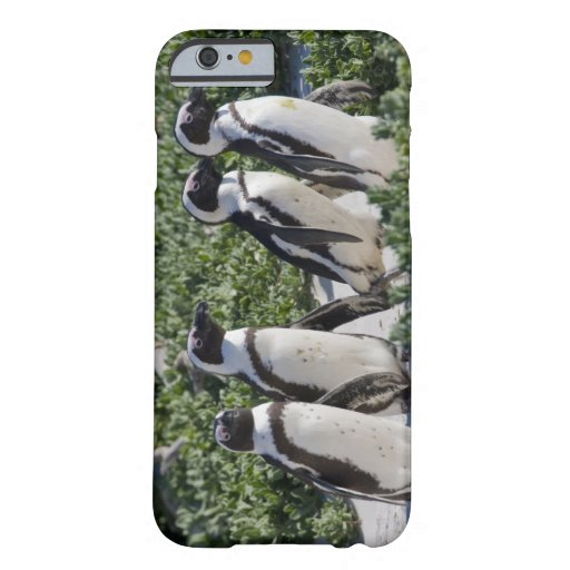 African Penguins, formerly known as Jackass iPhone 6 Case