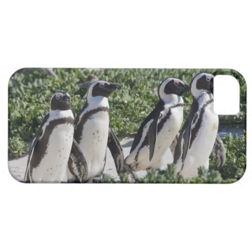 African Penguins, formerly known as Jackass iPhone 5 Covers
