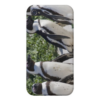 African Penguins, formerly known as Jackass iPhone 4 Case