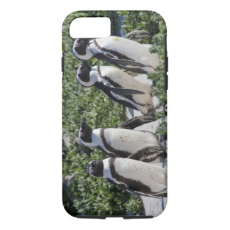 African Penguins, formerly known as Jackass iPhone 8/7 Case
