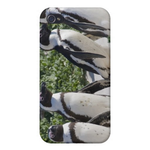 African Penguins, formerly known as Jackass iPhone 4/4S Covers