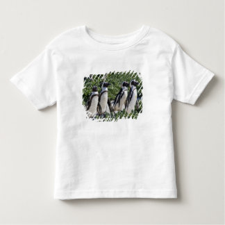 African Penguins, formerly known as Jackass Tee Shirt