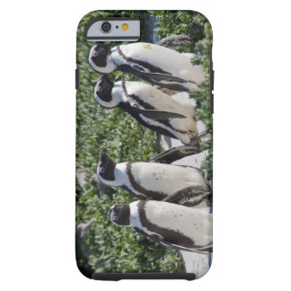African Penguins, formerly known as Jackass Tough iPhone 6 Case