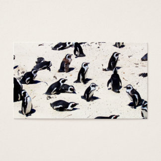 African Penguins on Boulders Beach Business Card
