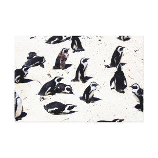African Penguins on Boulders Beach Canvas Print
