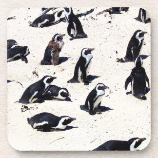 African Penguins on Boulders Beach Coaster
