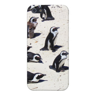 African Penguins on Boulders Beach iPhone SE/5/5s Case