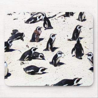 African Penguins on Boulders Beach Mousepad