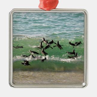 African penguins swimming at beach metal ornament