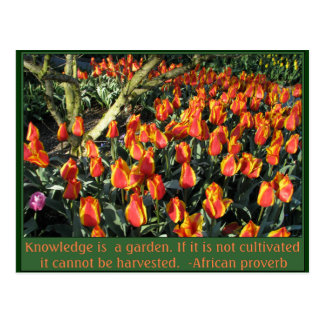 African proverb and flame tulips postcard